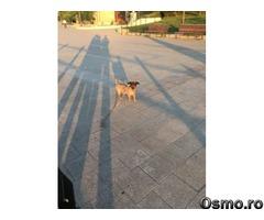 Anunturi | Animale de companie | Bucuresti